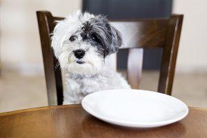 voedselintolerantie hond