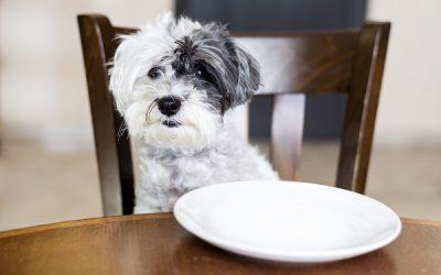 De juiste ondersteuning bij voedselintolerantie hond