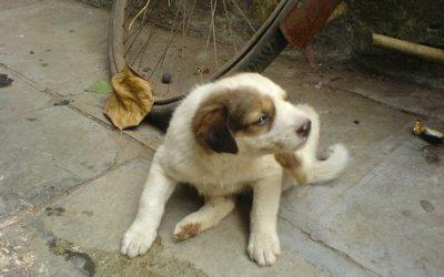 Hotspot hond – Hyndolac verlicht de klachten