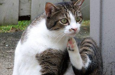 Hotspot kat – Gelukkig hebben we Hyndolac crème