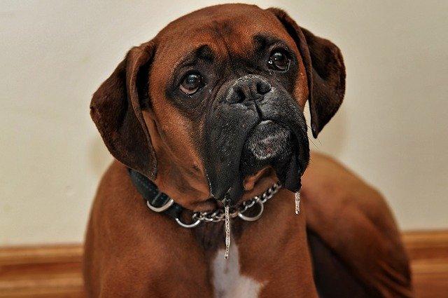Paardenmelk draagt bij aan een goede spijsvertering van jouw hond