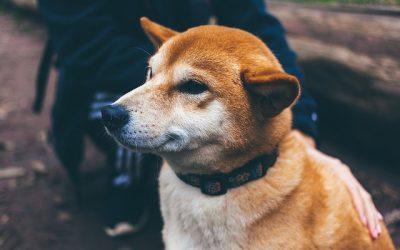 Paardenmelk, voor een natuurlijke stoelgang van hond en kat